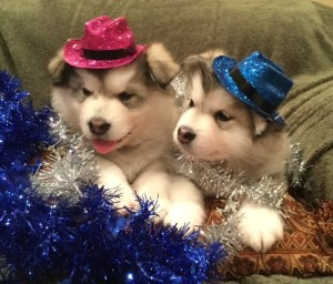puppies_in_hats