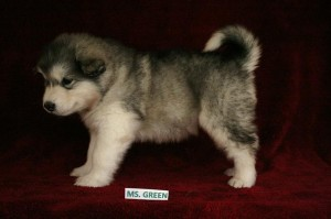 IMG_6085-Green