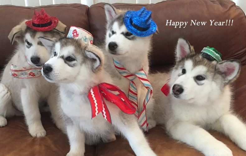HappyNewYear_puppies